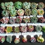 春は寄せ植えにトライ❣100均でも出来ちゃう😄可愛くてはまる💗多肉植物🌵のクラフトレシピ