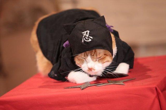 金時を演じる猫がかわいい