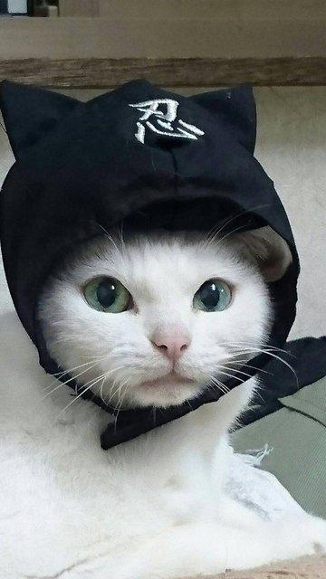 『猫侍』の主役だったあなごちゃんも友情出演!