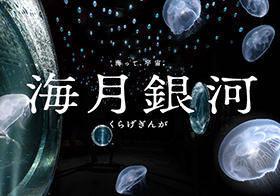https://www.kaiyukan.com/ (79958)