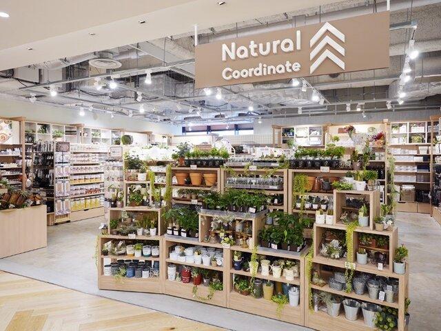Natural Coordinate リンクス梅田1号店