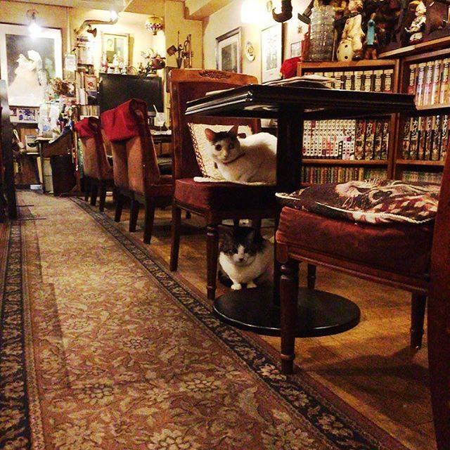 【フォトジェニック】看板猫のいるカフェ巡り「カフェ・アルル」