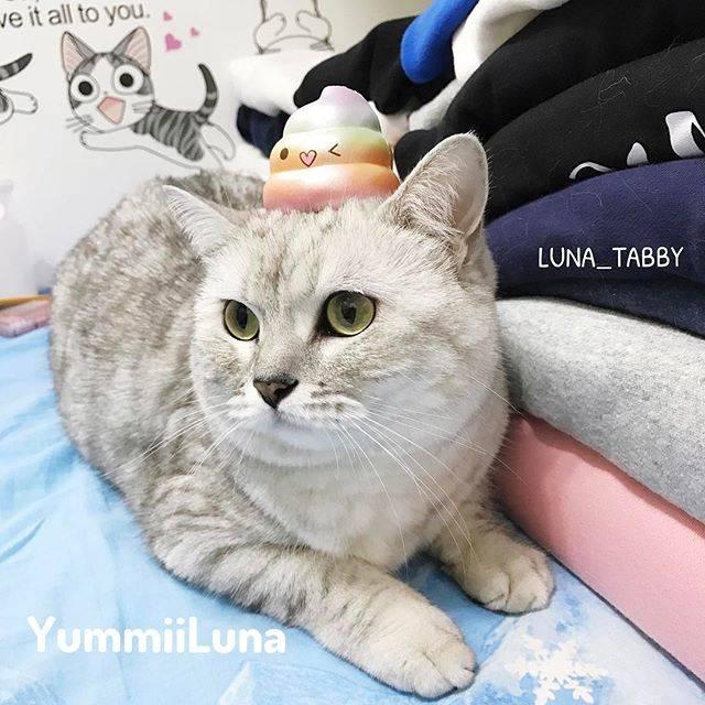 luna_tabby