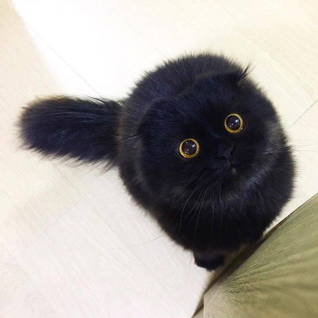 フォトジェニック猫ちゃん.13