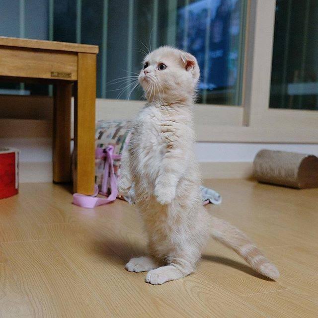 フォトジェニック猫ちゃん.6