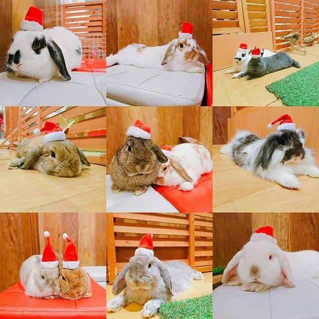 【たくさんのウサギ】