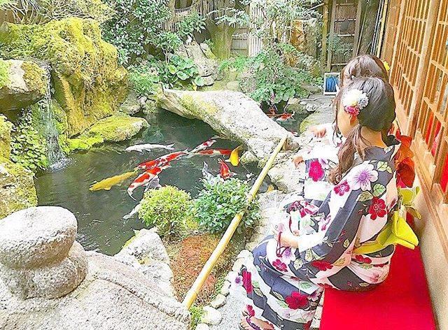 綺麗な鯉がいっぱいいるお庭🐠