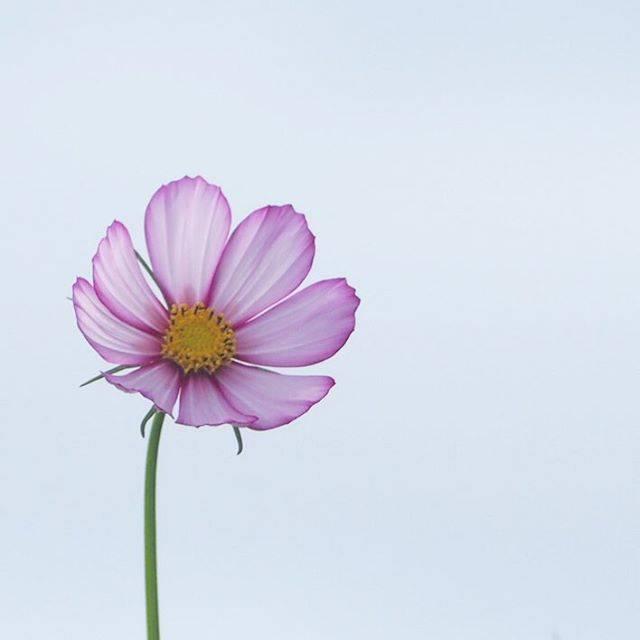 一本の花も空に映えて、おしとやか