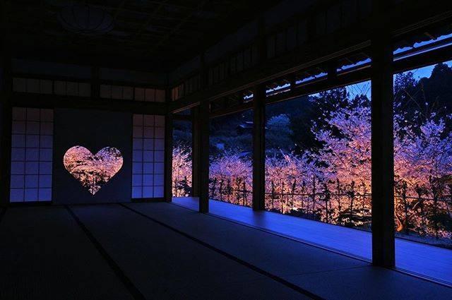 """@shoujuin on Instagram: """"桜のライトアップの日程につきましては、3月19日に正式発表致します。3月20日からご予約受付開始致します。詳しくは当院ホームページに掲載しております。#正寿院 #京都 #kyoto #桜 #春 #花"""" (55405)"""