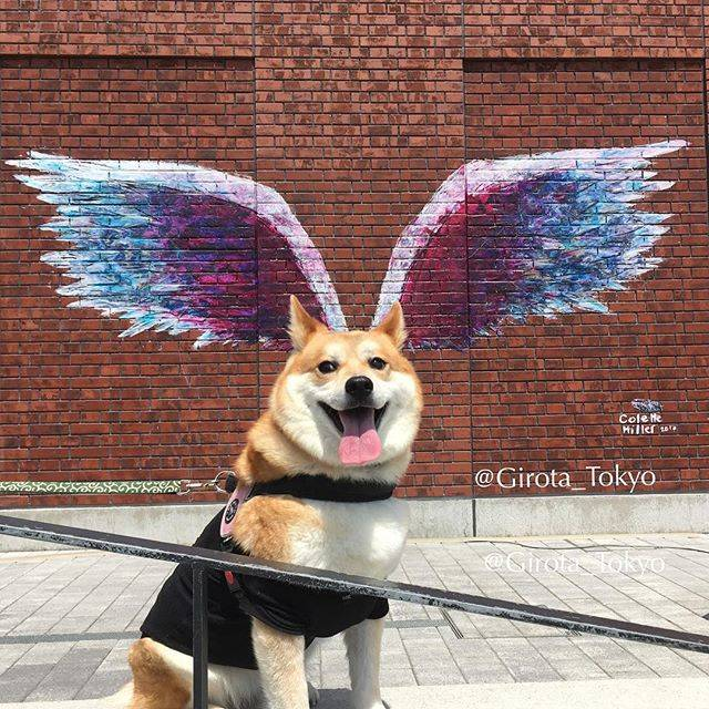 "Girota 次郎太/Tokyo🍣 on Instagram: ""Yippee!! It's finally Fly-yay! Time for a weekend everypawdy! 💜💙💚💛❤️💜💙💚💛❤️💜💙💚💛❤️💜💙💚💛❤️💜💙❤️💜💙💛❤️💜💙💛 - Global angel wings project created…"" (59185)"