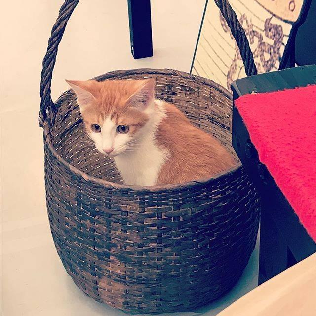 """イオかと聞かれればイオ? on Instagram: """"昨日猫見に行ったよ。#江戸ねこ茶屋"""" (64777)"""