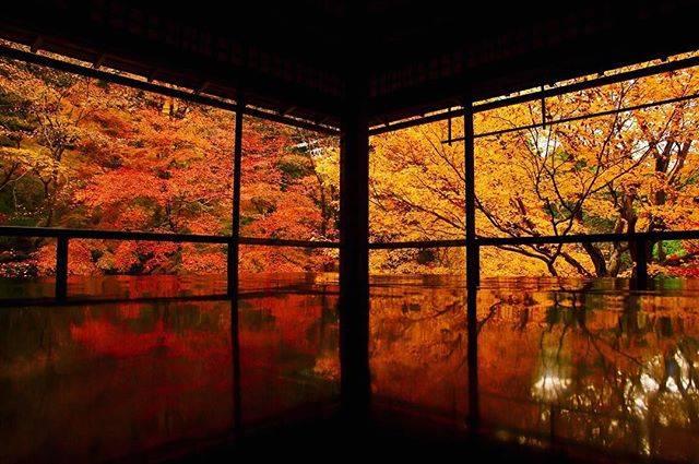 "HRphoto on Instagram: ""お気に入りの一枚。2017年に撮った秋の瑠璃光院。今年はもっと綺麗に撮りたい。#写真 #写真好きな人と繋がりたい #写真撮ってる人と繋がりたい #カメラ #カメラ好きな人と繋がりたい #カメラ好き #瑠璃光院 #瑠璃光院秋の特別拝観 #紅葉 #京都"" (66430)"