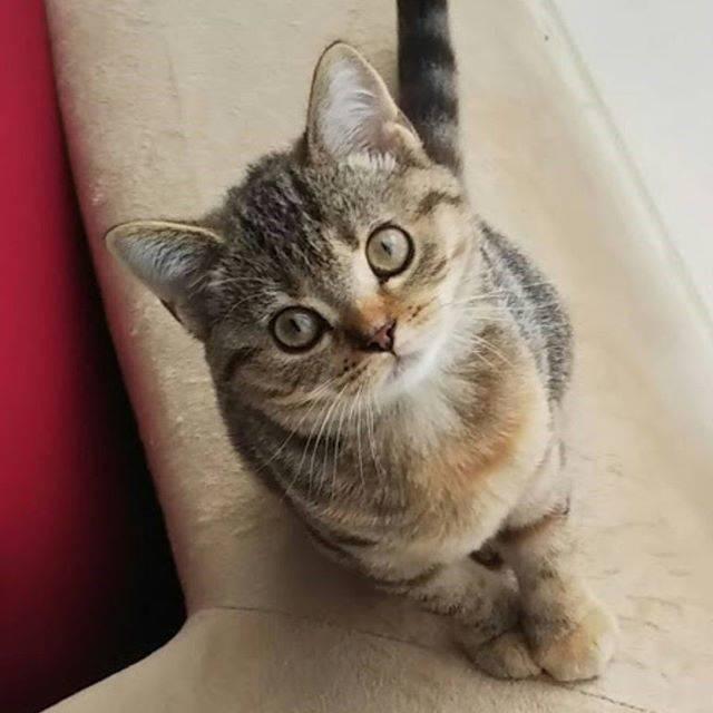 """フェリシモ猫部 on Instagram: """"安心して暮らせる日々がずっと続きますように。  前脚を揃えてお出迎え(● ˃̶͈̀ロ˂̶͈́)੭ꠥ⁾⁾ #キュンとしたできごと #フェリシモ猫部 #猫部 #ねこ部 #ネコ部 #ねこぶ #nekobu #猫 #ねこ #ネコ #neko #cat…"""" (72644)"""