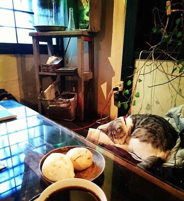"""@chiiiico_o on Instagram: """"お店の猫ちゃん、気持ち良さそうに眠っていました。お客さんのダウンコートの上で(笑)#mugimaru2 #kagurazaka #猫 #カフェ#cat #ムギマル2 #神楽坂#マンジュウ #マンヂウカフェ#古民家カフェ#tokyo"""" (73108)"""