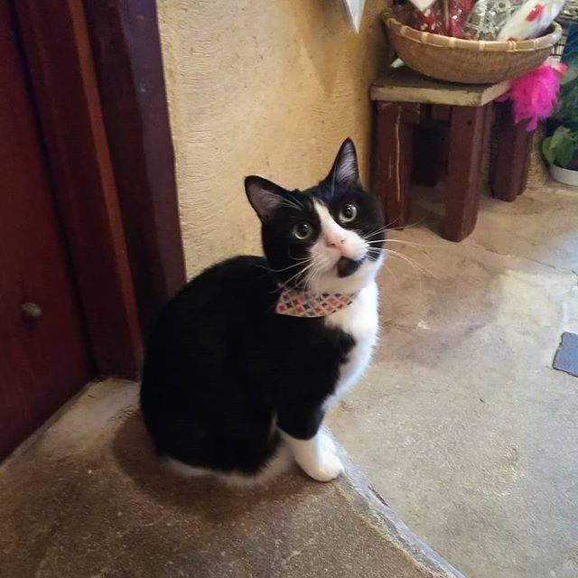 """ボン母さん on Instagram: """"激カワちゃん!#すずのすけ #ギャラリーエフ #ねこ #ネコ #猫 #catlover #catsofinstagram #catstagram #cat #instacat #neko #suzunosuke #galleryef"""" (73115)"""