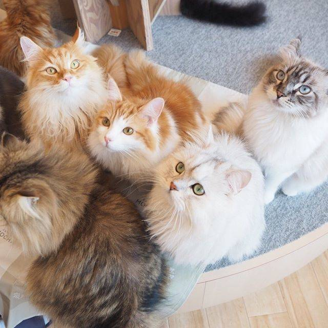 """猫カフェMOCHA on Instagram: """"何が始まるの❓❓ #猫カフェmocha #猫カフェモカ #猫カフェモカラウンジ #catcafe #cat #mocha #可愛い #kitty #猫 #ネコ #イオン #レイクタウンmori #レイクタウン #集合"""" (77515)"""