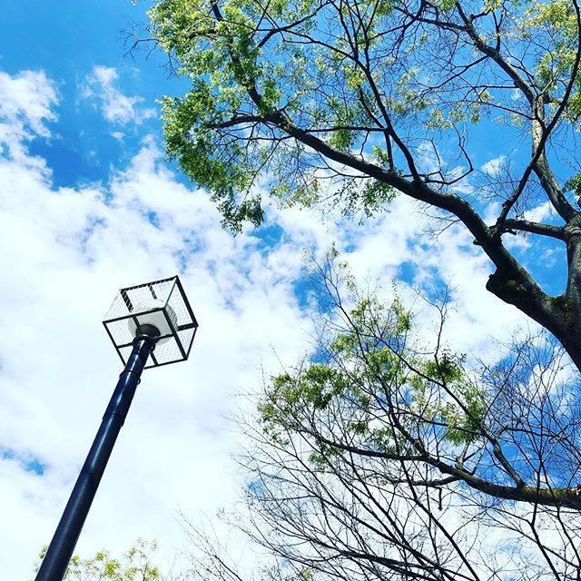 "Yutaka Koyama on Instagram: ""光合成にて、休息。#H31.4.15.#小春日和 #代々木公園"" (79653)"