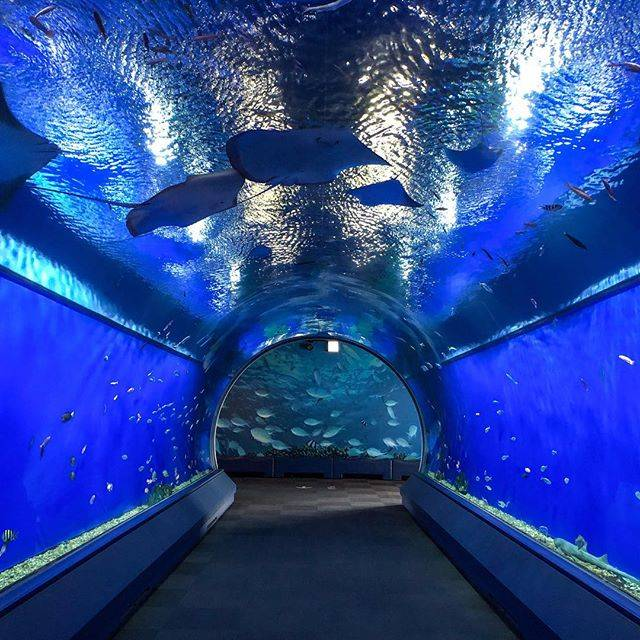 "海遊館/KAIYUKAN OFFICIAL on Instagram: ""アクアゲート Aqua gate  ここを抜けると、太平洋を巡る旅のはじまり🌟 When you get through here , the beginning of a trip over the Pacific Ocean . …"" (79959)"