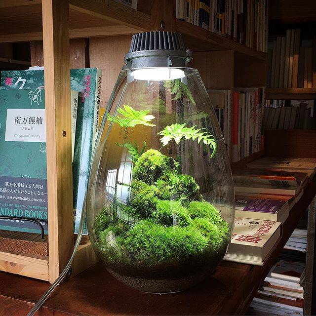 "Mosslight-LED on Instagram: ""#mosslight#モスライト#苔#コケ#mossy#mossa#moss#terrarium…"" (82764)"