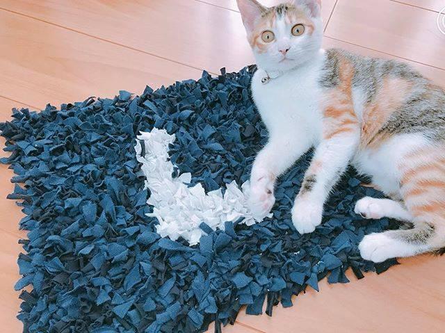 """maki on Instagram: """"子どものパジャマでDIY!猫のエサを置くシャギーマット☆#シャギーマット #diy #時間かかったw #でも満足 ✨"""" (83640)"""
