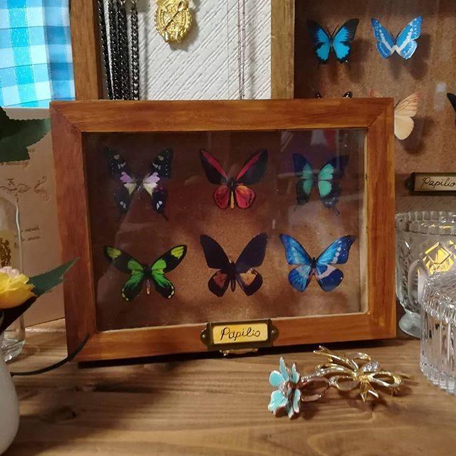"""うさぎ大好き!えばら!画家 雨竜堂夢乃 on Instagram: """"簡単に作れます✩.*˚木箱はセリアで購入。ネームプレートは廃盤になってますがそれを使ってます。蝶々は写真をプリンターで写真用用紙にコピー。それを切り抜く。爪楊枝を用意。短く切って、両端に百均の瞬間接着剤をつけて、木箱と蝶々を固定✩.*˚繰り返して複数蝶々をつけて完成💜❤💙💚…"""" (88799)"""
