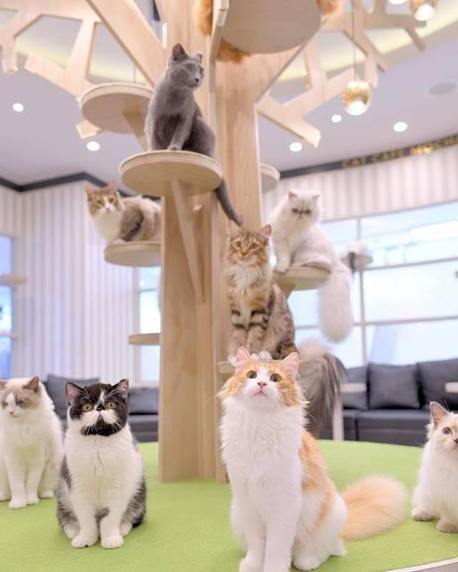 """猫カフェMOCHA(猫カフェモカ) on Instagram: """"大宮モカにゃんず、ツリーに大集合😼  #猫カフェmocha #猫カフェモカ #猫カフェmochaアルシェ大宮店 #猫カフェモカアルシェ大宮店 #catcafe #catcafemocha #cat #mocha #lovecat  #mochasta #にゃんすたぐらむ…"""" (89819)"""