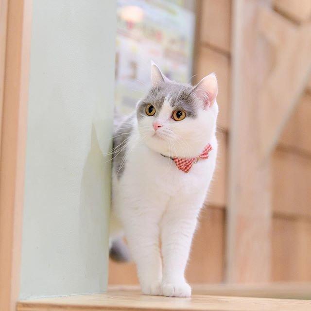 """猫カフェMOCHA(猫カフェモカ) on Instagram: """"何か見つけたのかな⁉️ #猫カフェmocha #猫カフェモカ #猫カフェmocha秋葉原店 #猫カフェモカ秋葉原店 #catcafe #catcafemocha #mochaぶり #cat #mocha #lovecat  #mochasta #catcafetokyo…"""" (93367)"""