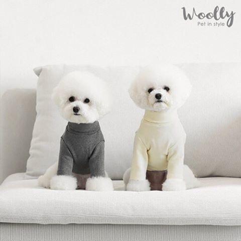 """Roomnhome on Instagram: """"WOOLY_タートルネックTシャツ_S~XL_綿95%_愛犬洋服_turtleneck . . . ▣▣▣▣▣▣▣▣▣▣▣▣▣▣▣▣▣▣▣▣▣▣▣▣▣▣▣▣さらに、2500円以上購入の方へ100円割引 クーポンコード: ROOM0126…"""" (96643)"""