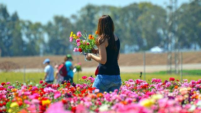 Free photo: Flower, Nature, Summer, Outdoors - Free Image on Pixabay - 3211800 (54968)