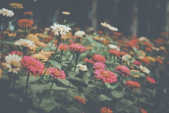 Flower Garden Nature · Free photo on Pixabay (60540)