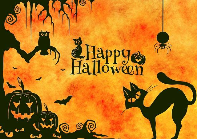 Halloween Cat Weird - Free image on Pixabay (89764)