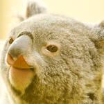 オーストラリアの基本情報