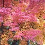 京都 紅葉旅で失敗しない3つの方法