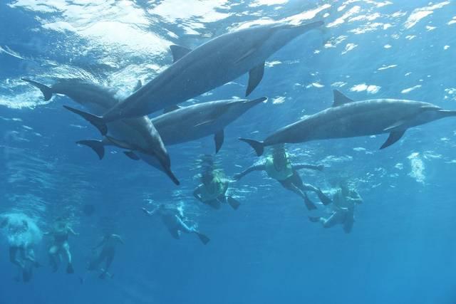 ハワイに来たら、一度は体験してみたい!野生のイルカと泳ぐツアー
