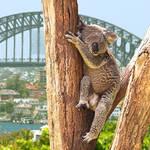 オーストラリアで使えるWi-Fiは?フリーWi-Fiか、Wi-Fiレンタルサービスを活用どちらが良い?