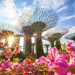 シンガポールで使えるWi-Fiは?フリーWi-Fiだけ?それともWi-Fiレンタルサービスを活用?