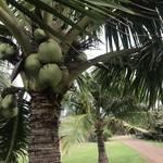 ハワイの大地の恵みがお肌を守る!ココナツ素材のハワイアンコスメ