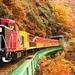 京都・嵐山で秋を堪能! トロッコ電車~保津川下り 秋のお勧めコース