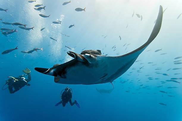 石垣島でマンタに出会う体験ダイビングに挑戦!