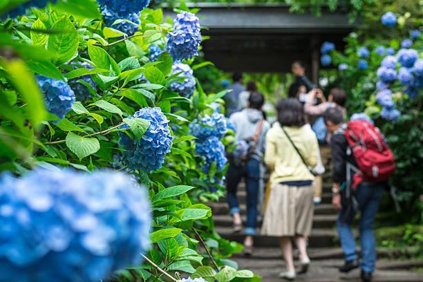 鎌倉の明月院