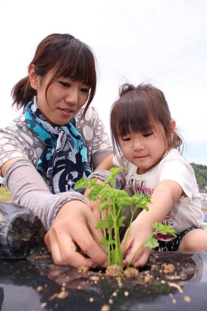 親子で協力して定植作業