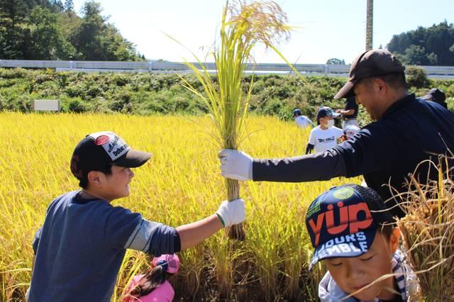 稲刈りを体験する子供たち