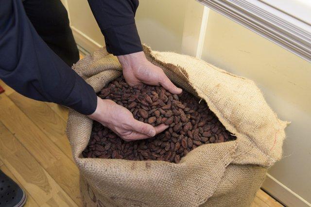 チョコレートの原料 生カカオ