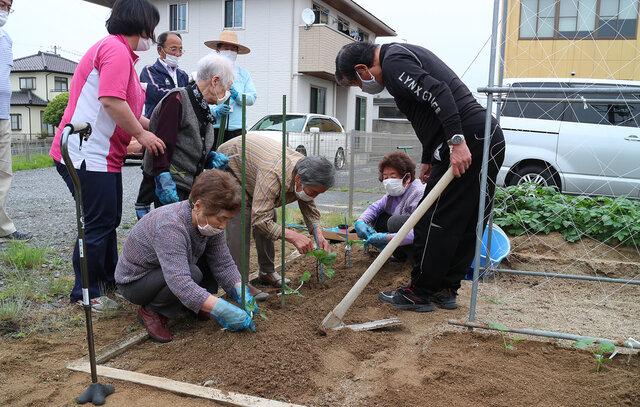 苗を植え付ける利用者ら