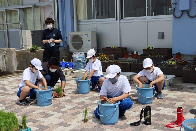 苗を丁寧に植える児童ら