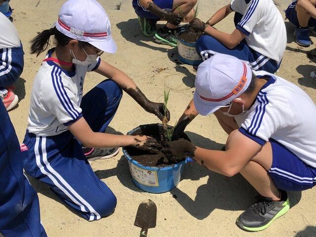 苗を植える児童ら