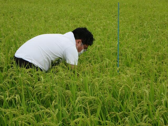 調査を行う県中農林事務所職員