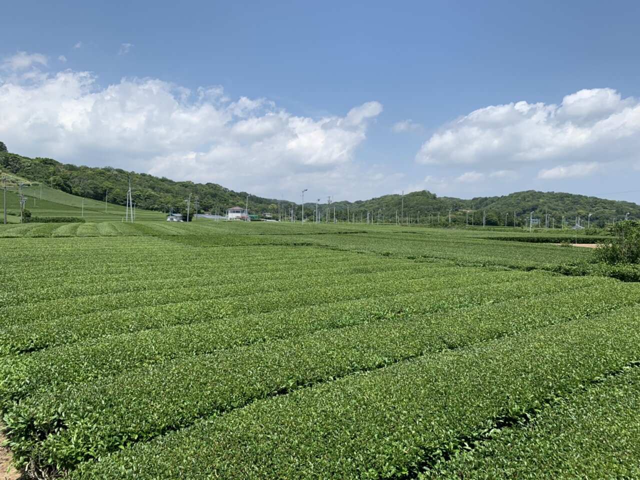 静岡県で耕作放棄地などを大規模な茶園に造成する茶産地育成事業(新産地事業)を開始