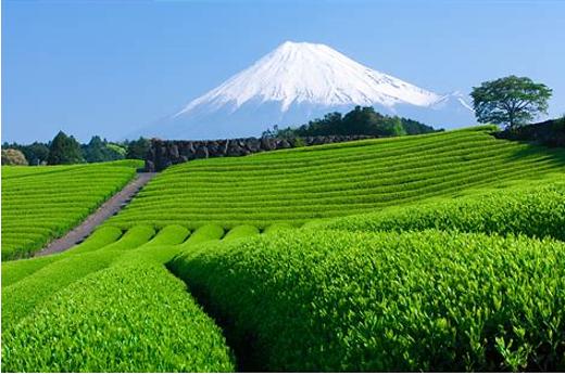 日本初!!お茶の力を活用した抗菌繊維・基準値の約3倍の抗菌性「カテキンファイバー®」~ 11月より本格提供開始 ~