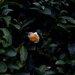 「日常に、小休止を。」をコンセプトに活動する日本茶ブランド「美濃加茂茶舗」